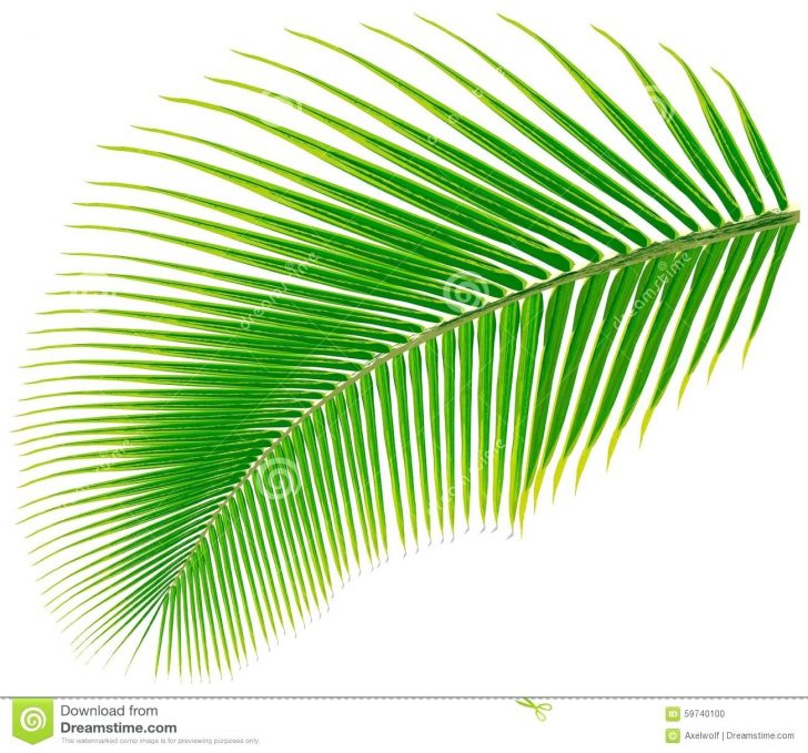 Free Printable Palm Tree Template