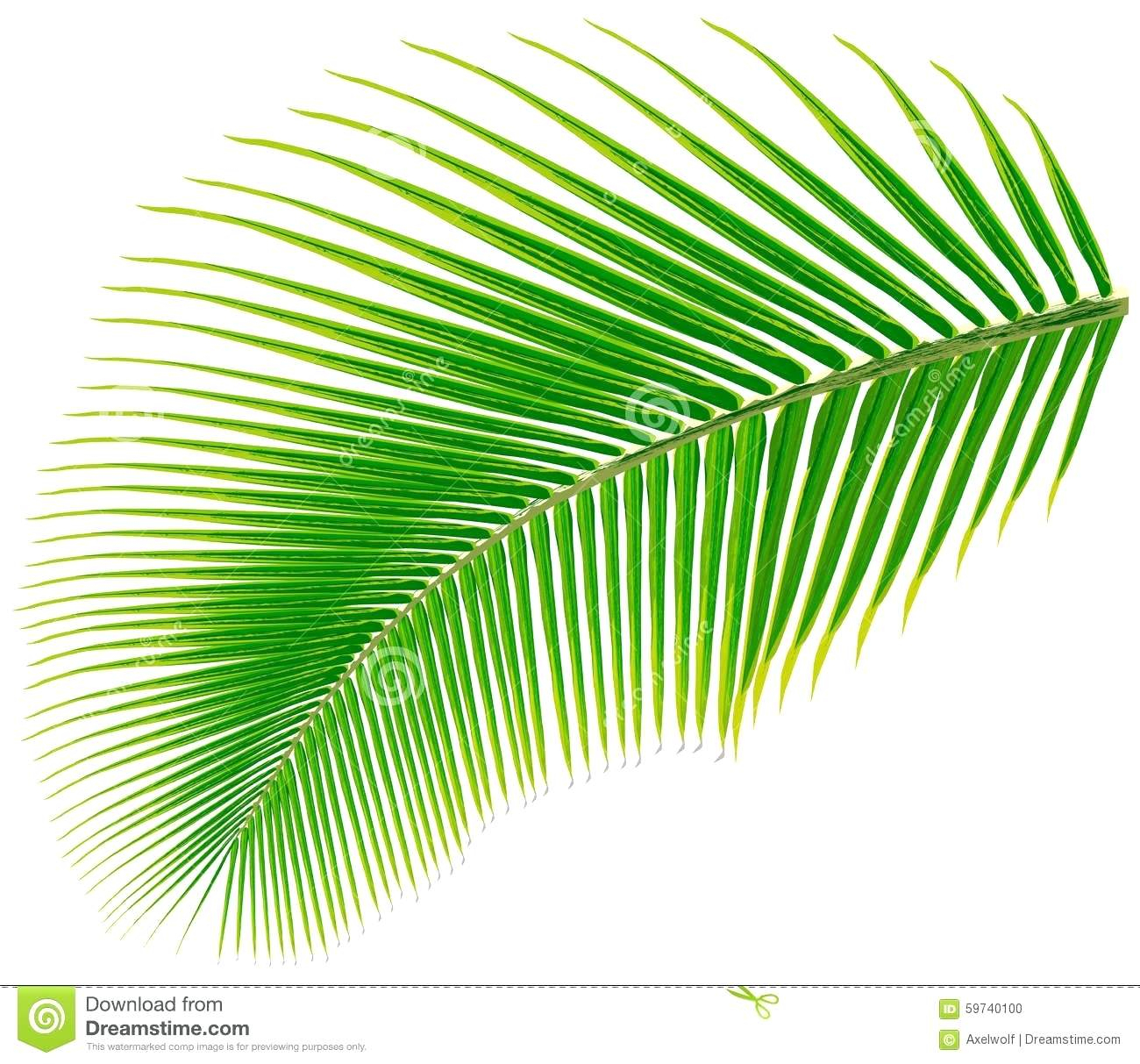 025 Palm Tree Leaves Template Leaf Vector Illustration Cut Out Ideas - Free Printable Palm Tree Template