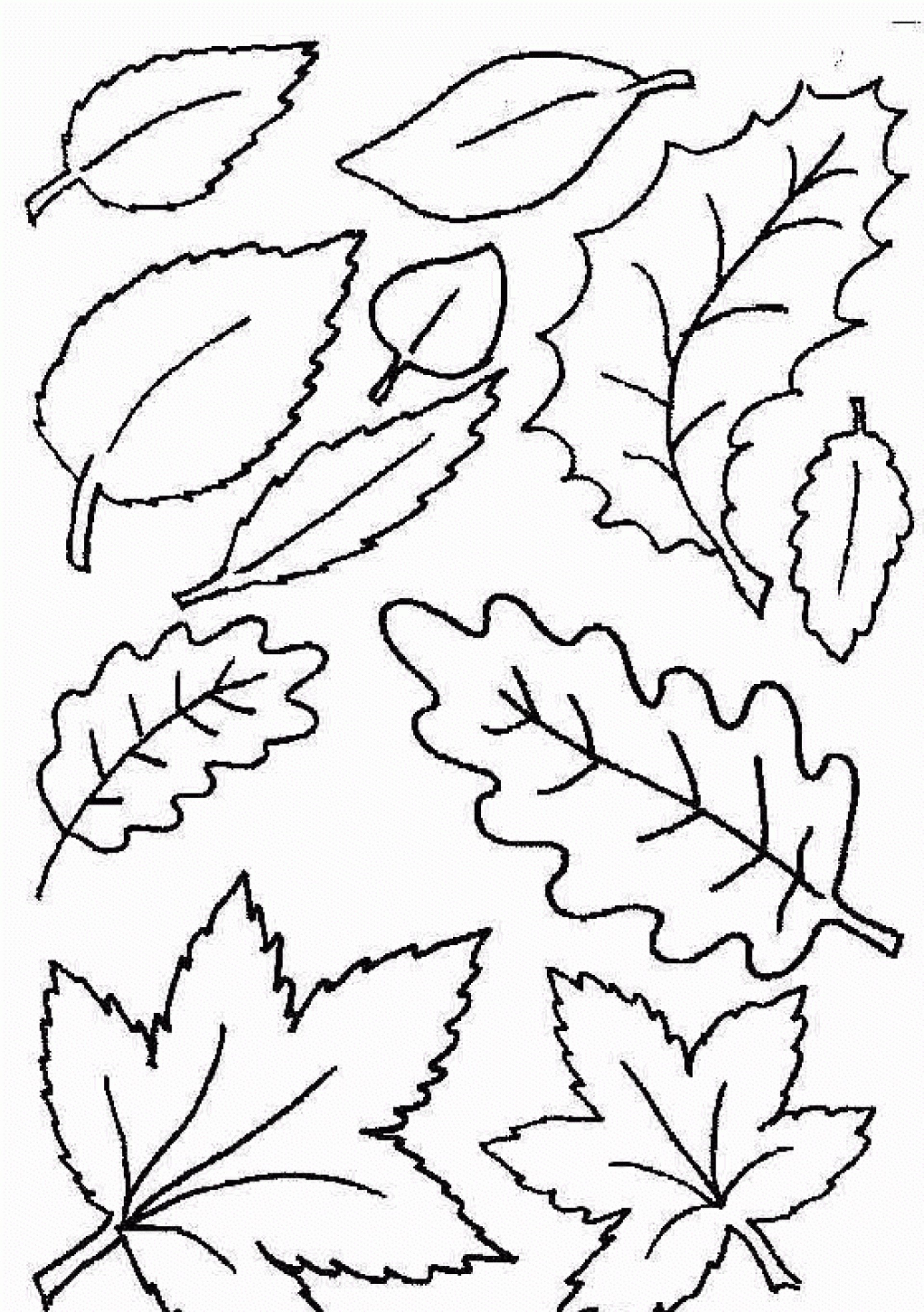 028 Template Ideas Free Printable Leaf Best Fall Leaves Coloring - Free Printable Leaf Coloring Pages