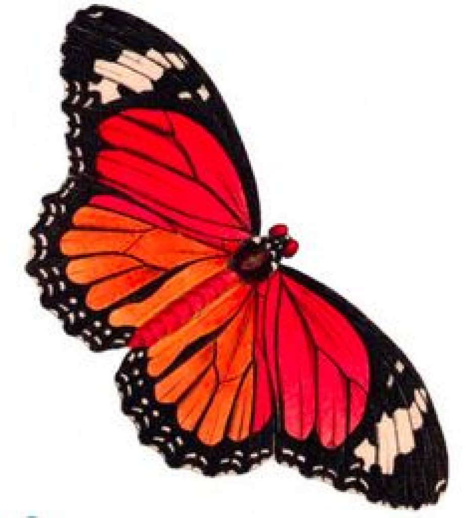 15 Free Printable Clipart Butterfly For Free Download On - Free Printable Butterfly Clipart