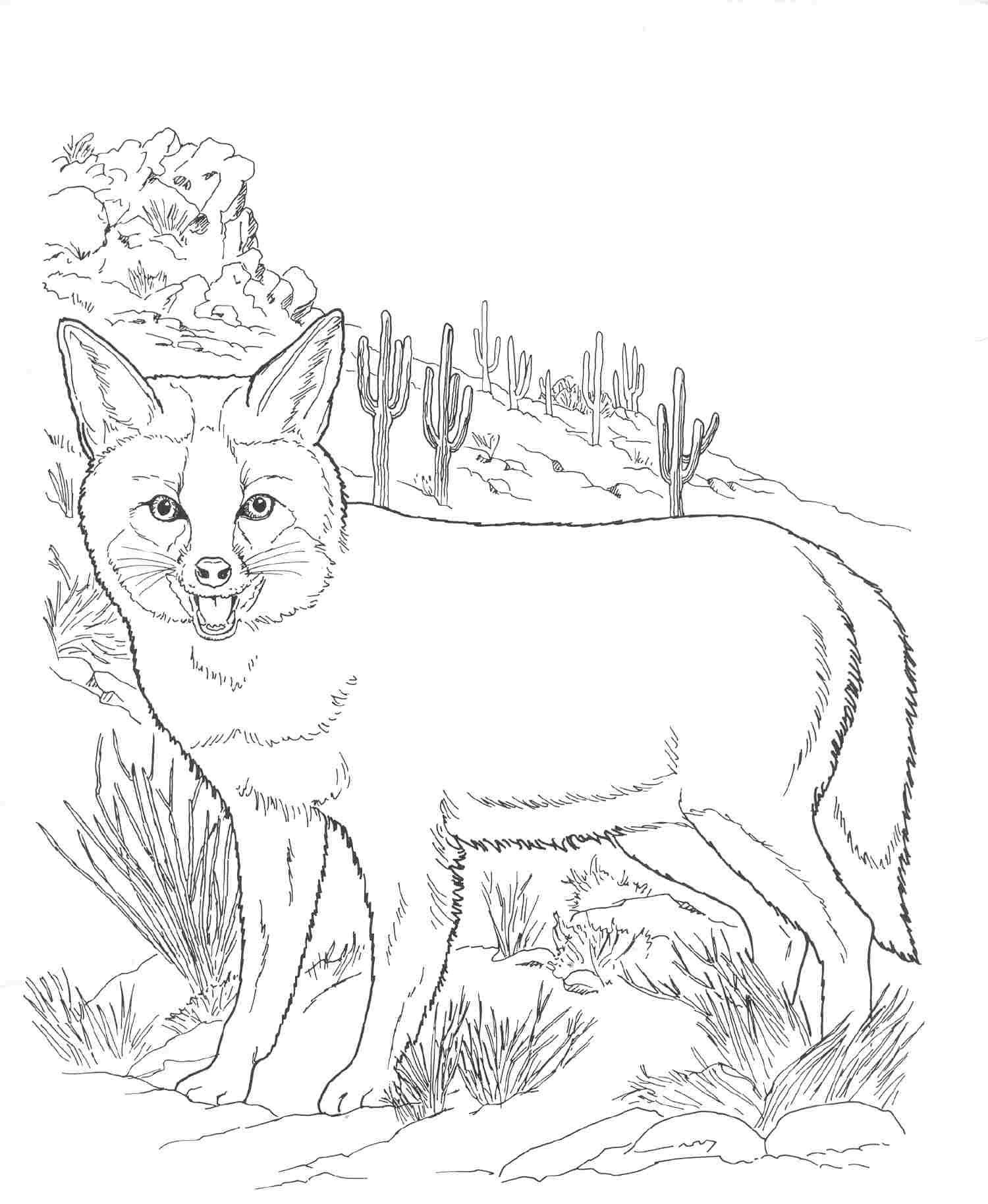 30 Coloring Pages Desert | Coloring Pages | Pinterest | Animal - Free Printable Desert Animals