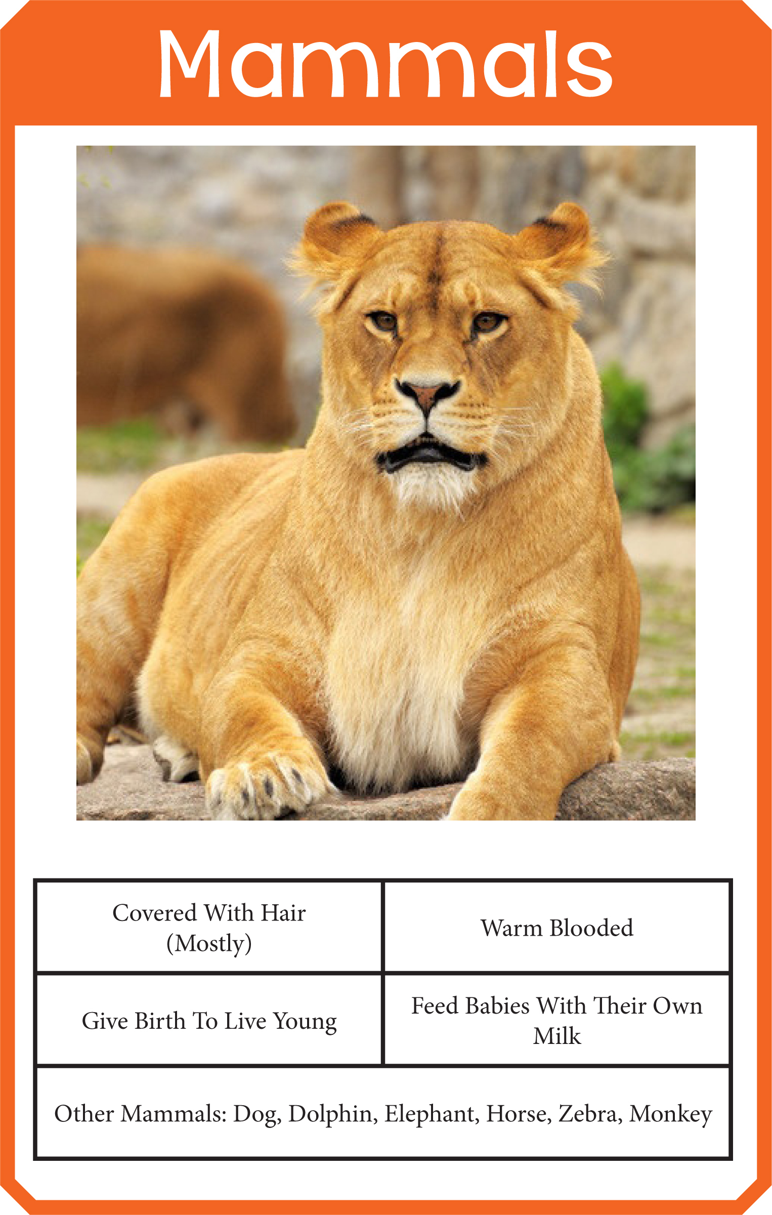 Animal Classification Cards » One Beautiful Home - Free Printable Animal Classification Cards