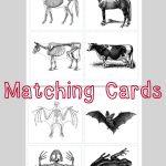 Animal Skeleton Matching Cards   احياء   Pinterest   Animal   Free Printable Animal X Rays