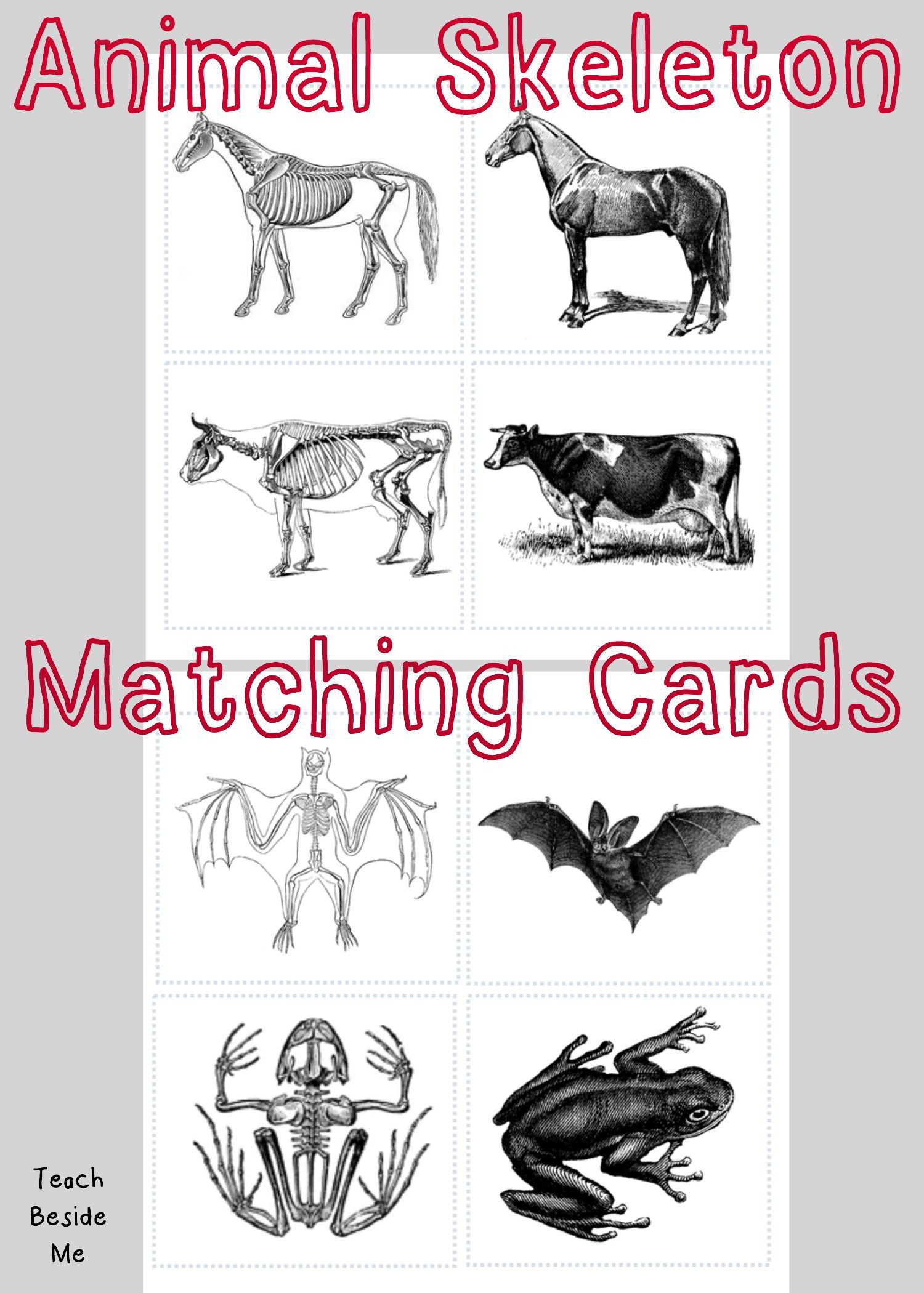 Animal Skeleton Matching Cards | احياء | Pinterest | Animal - Free Printable Animal X Rays
