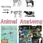 Animal Skeleton Matching Cards – Teach Beside Me   Free Printable Animal X Rays