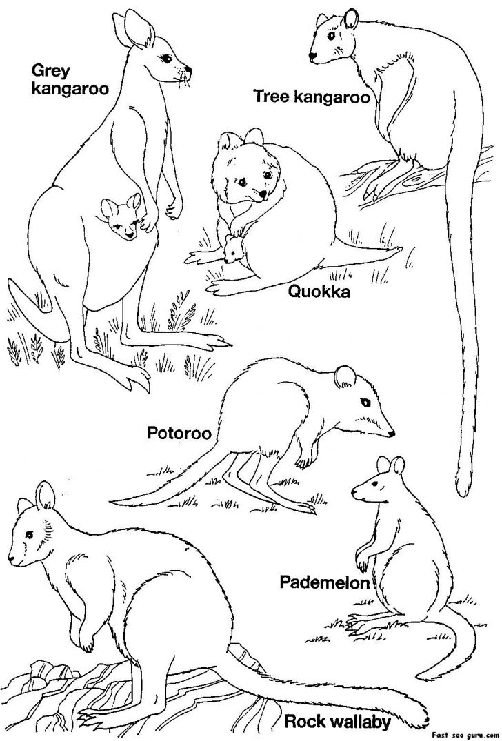 Free Printable Australian Animals