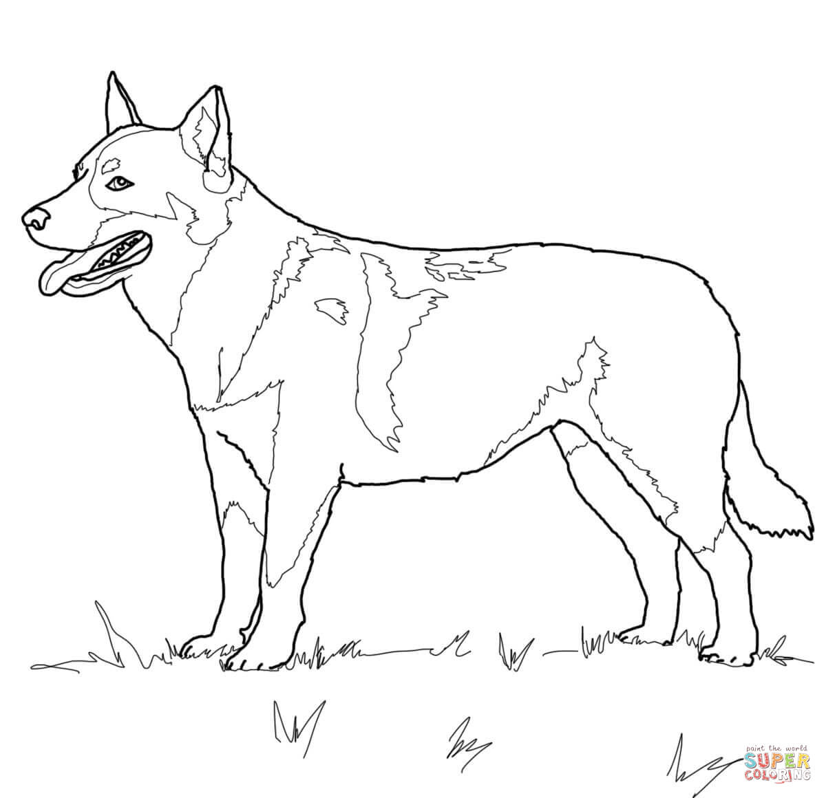 Australian Cattle Dog Coloring Page   Free Printable Coloring Pages - Free Printable Dog Coloring Pages