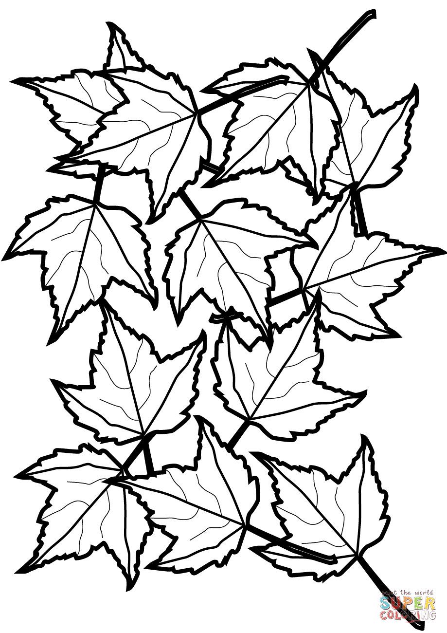 Autumn Maple Leaves Coloring Page | Free Printable Coloring Pages - Free Printable Fall Leaves Coloring Pages