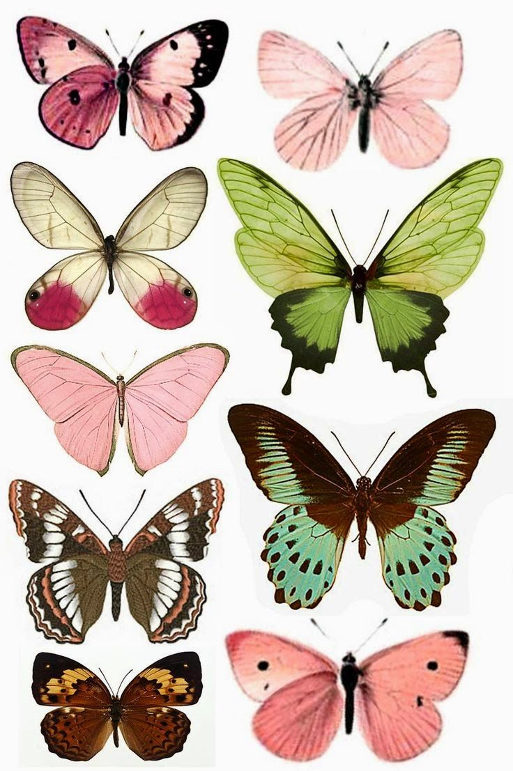 Beyond24Colours: Free Printables | References | Pinterest | Free - Free Printable Butterfly