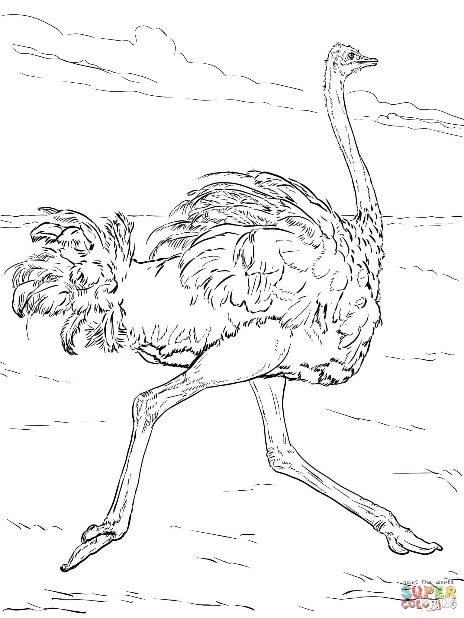 Coloriage - Autruche Qui Court | Coloriages À Imprimer Gratuits - Free Printable Desert Animals