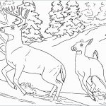 Coloring Pages : Amazing Wild Animal Coloring Sheets Pages Book   Free Printable Wild Animal Coloring Pages