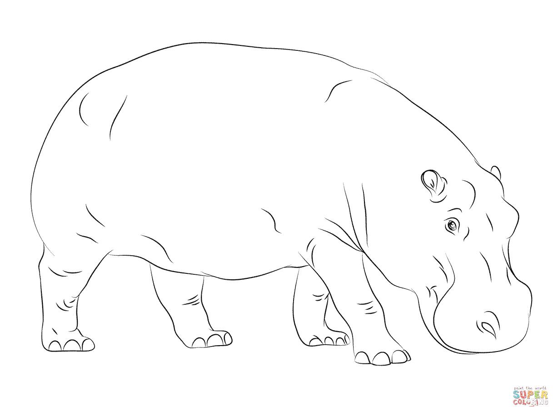 Cute Hippopotamus Coloring Page | Free Printable Coloring Pages - Free Printable Hippo Coloring Pages
