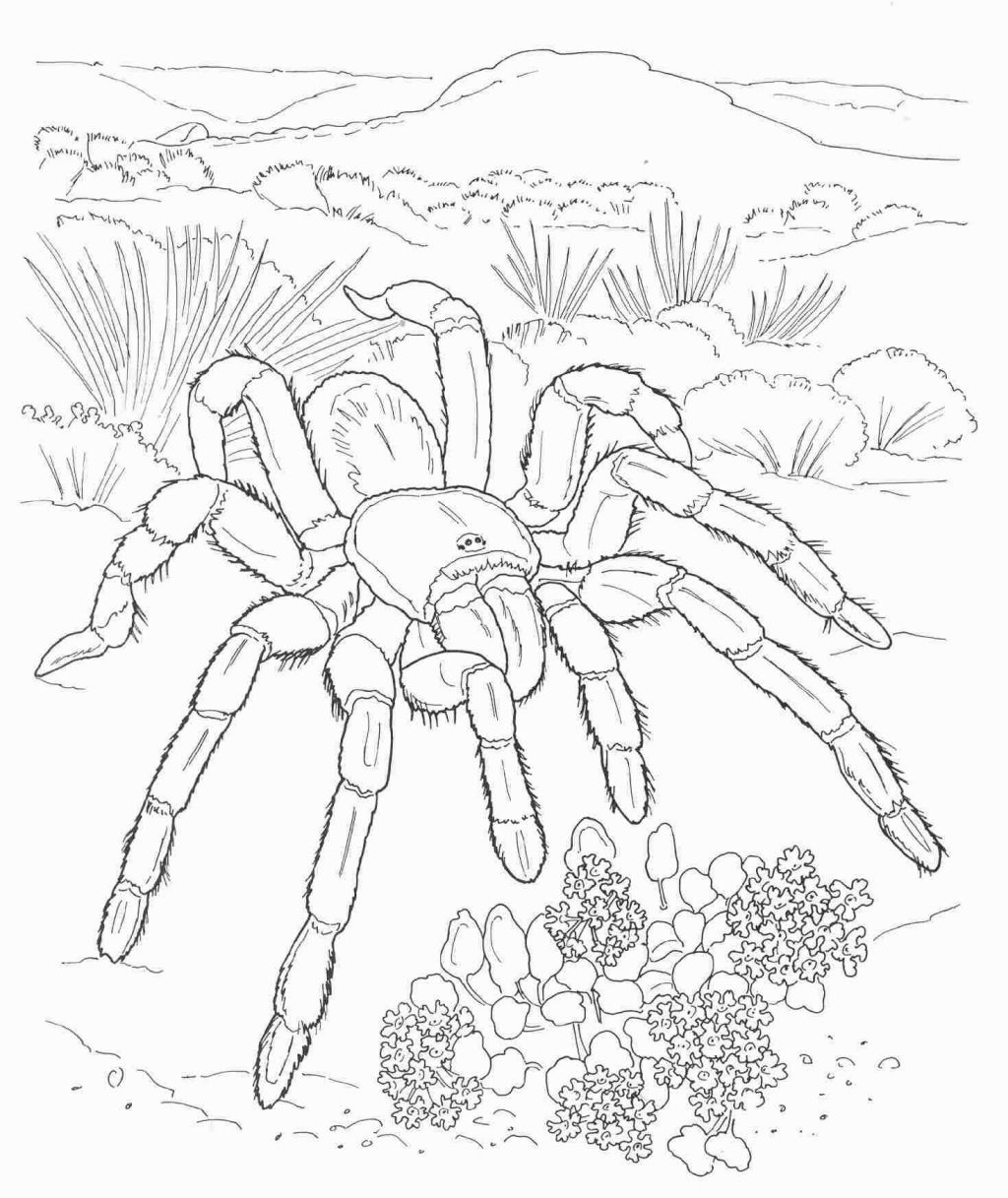 Desert Animal Coloring Pages | Coloring Pages | Pinterest | Desert - Free Printable Desert Animals