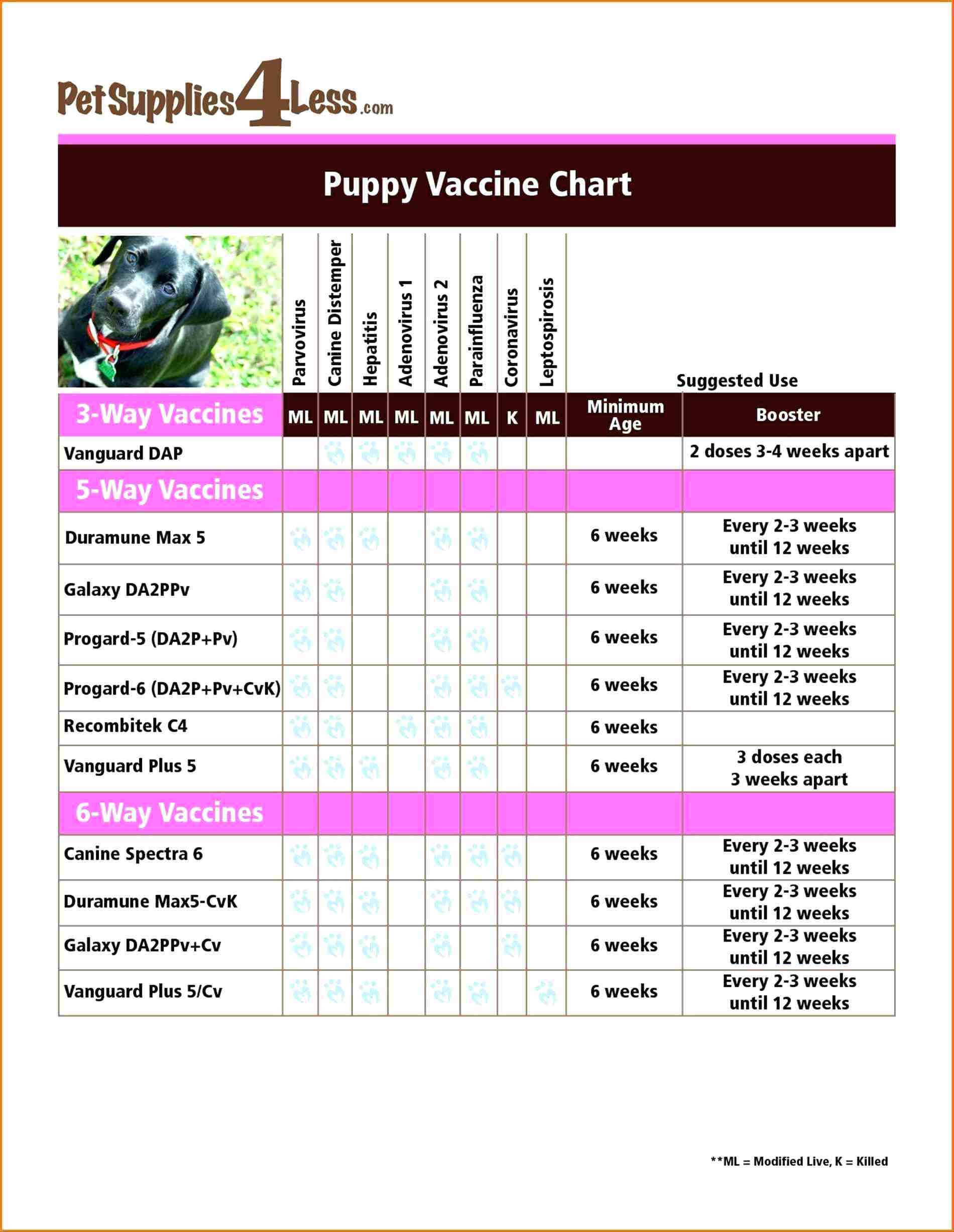 Dog Vaccination Chart Printable - Essaywritesystem - Free Printable Dog Shot Records