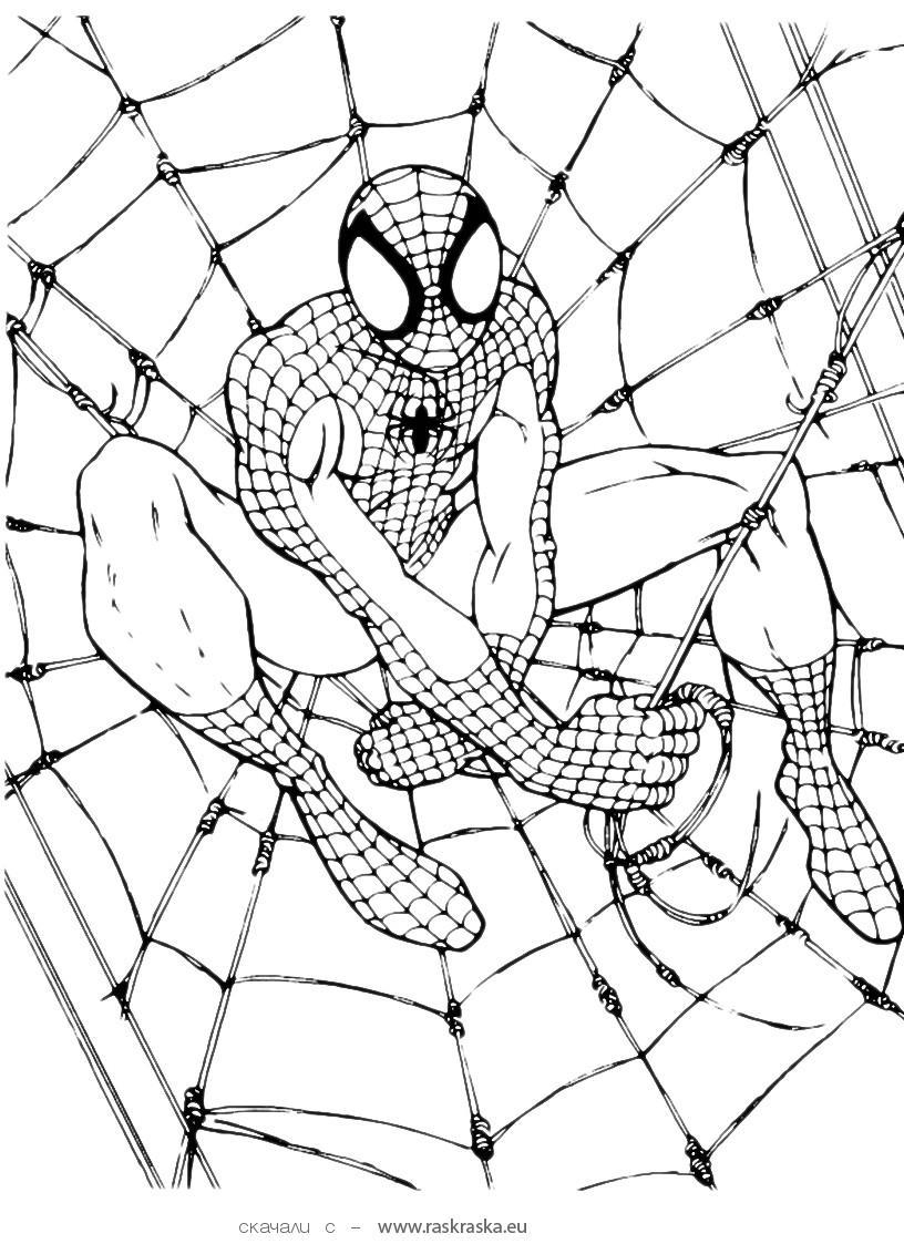 √ Free Printable Spiderman Coloring Pages For Kids - Free Printable Spiderman Coloring Pages