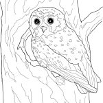 Elf Owl Coloring Page | Free Printable Coloring Pages   Free Printable Owl Coloring Sheets