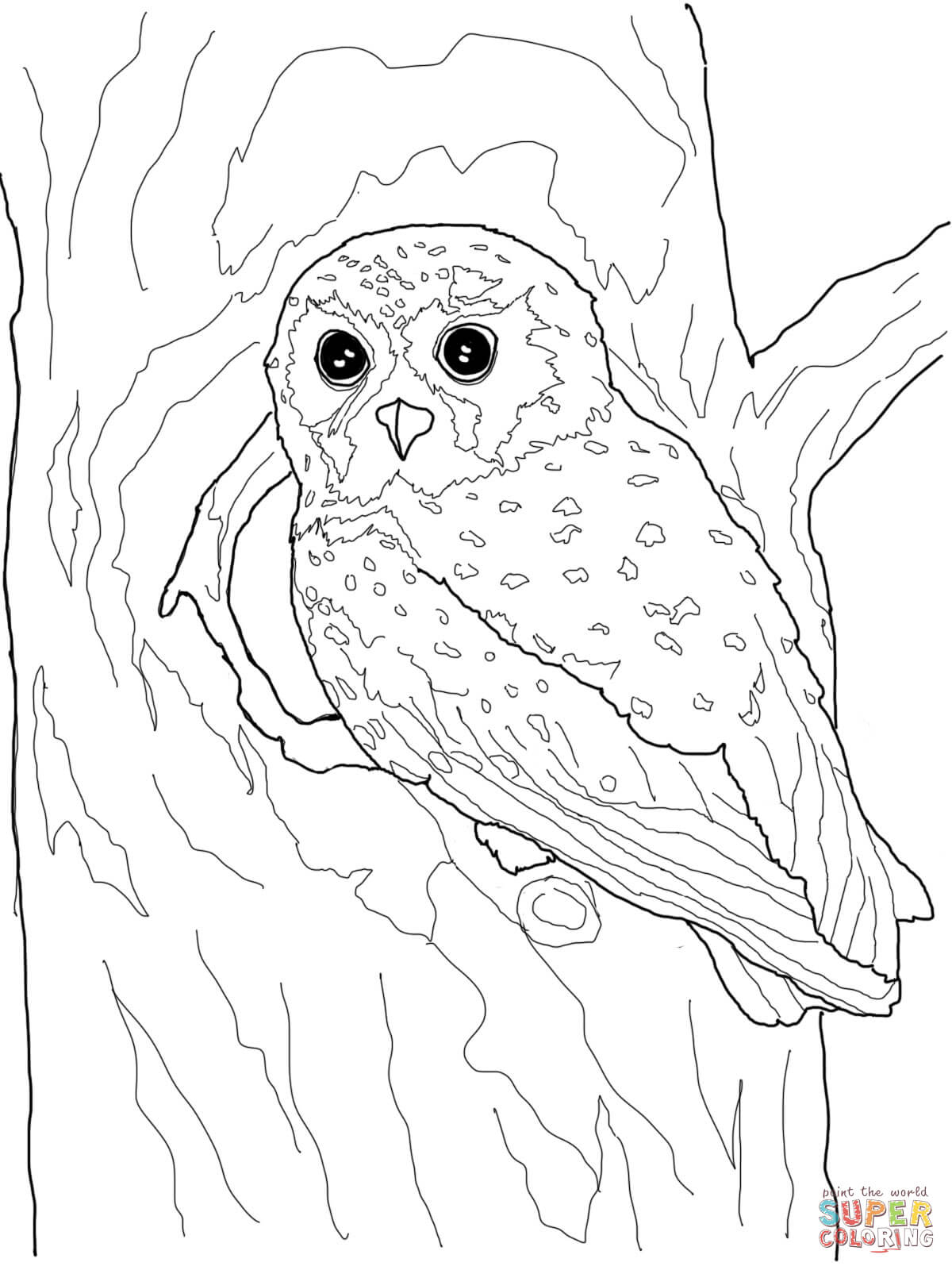 Elf Owl Coloring Page | Free Printable Coloring Pages - Free Printable Owl Coloring Sheets