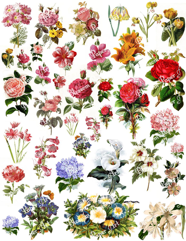 Flowers Collage Sheet Digital Scrapbook Scrapbooking | Etsy - Free Printable Decoupage Flowers