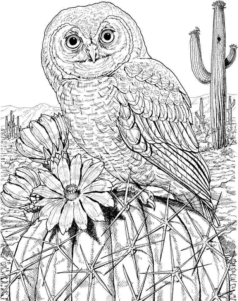 Free Color Pages Owls | Download Printable Free Animal Owl Colouring - Free Printable Owl Coloring Sheets