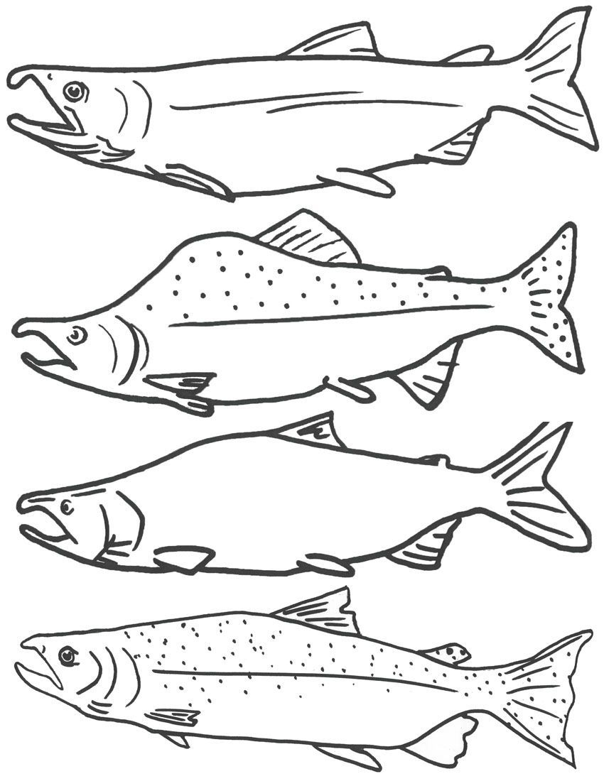 Free Coloring Page Of Salmon Fish, Free Printable Fish Coloring - Free Printable Fish Coloring Pages