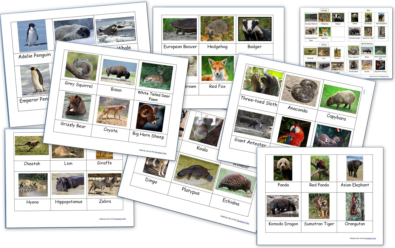 Free Montessori 3-Part Cards Archives - Homeschool Den - Free Printable Animal Classification Cards