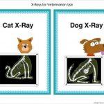 Free Printable Animal X Rays   Free Printable   Free Printable Animal X Rays