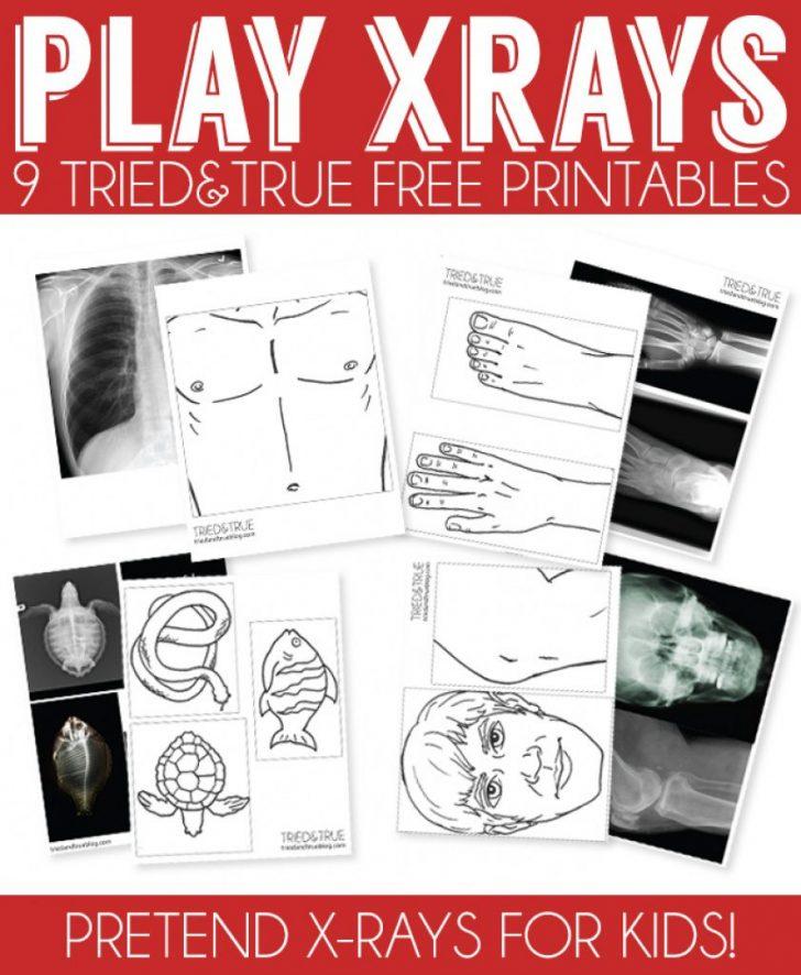 Free Printable Animal X Rays