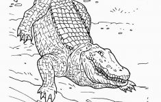 Free Printable Pictures Of Crocodiles