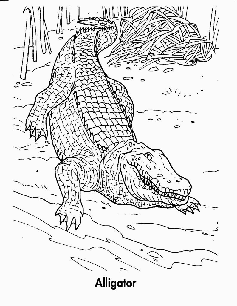 Free Printable Crocodile Coloring Pages For Kids For Alligator - Free Printable Pictures Of Crocodiles