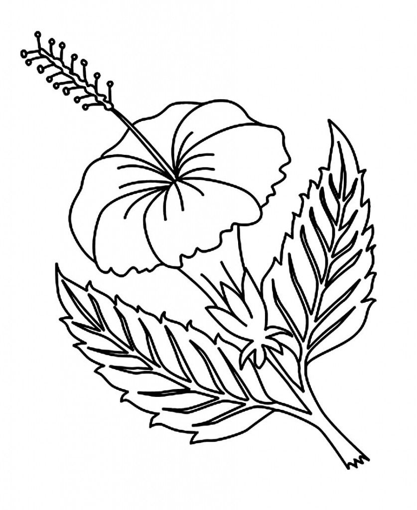 Free Printable Hibiscus Coloring Pages For Kids | Coloring Pages - Free Printable Hibiscus Coloring Pages