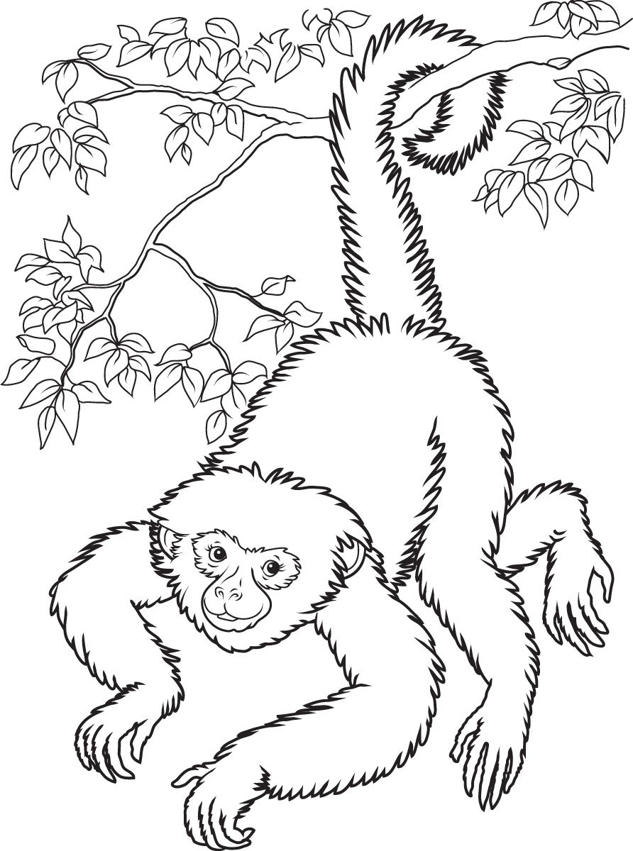 Free Printable Monkey Coloring Pages For Kids | Home Furniture - Free Printable Monkey Coloring Sheets