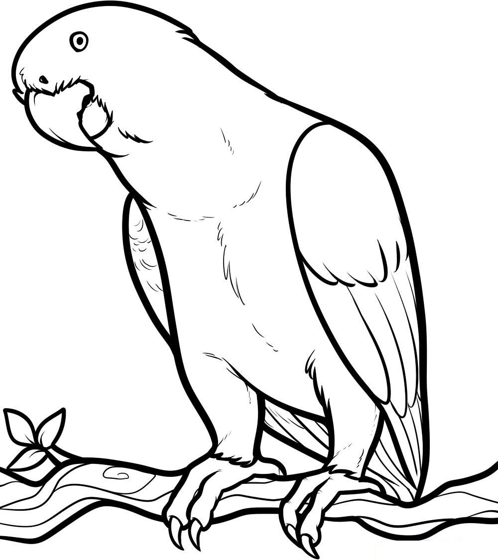 Free Printable Parrot Coloring Pages For Kids - Coloring Home - Free Printable Parrot Coloring Pages