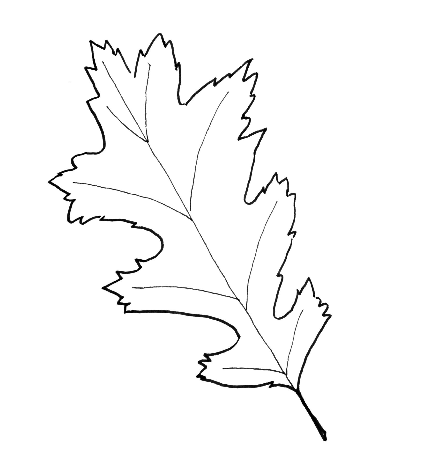 Fresh Printable Leaf Pattern Interesting Templates Coloring Pages - Free Printable Oak Leaf Patterns