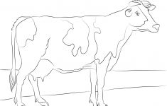 Coloring Pages Of Cows Free Printable