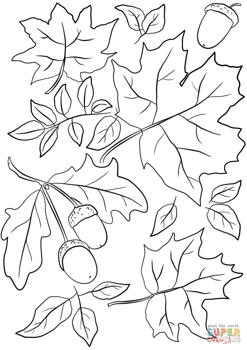 Leaf Coloring Pages Autumn Leaves And Acorns Page Free Printable 849 - Free Printable Leaf Coloring Pages