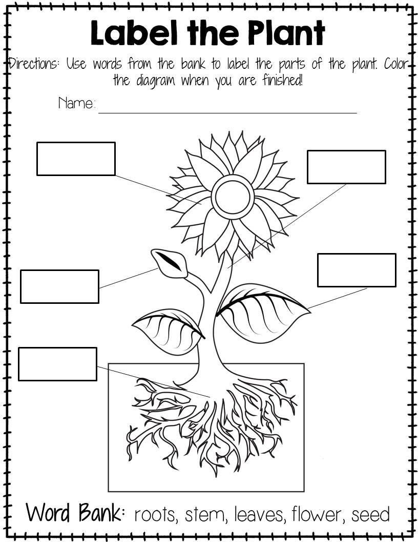 Plant Labeling Worksheet - Free | Freebies - Amanda's Little - Free Printable Plant Labels