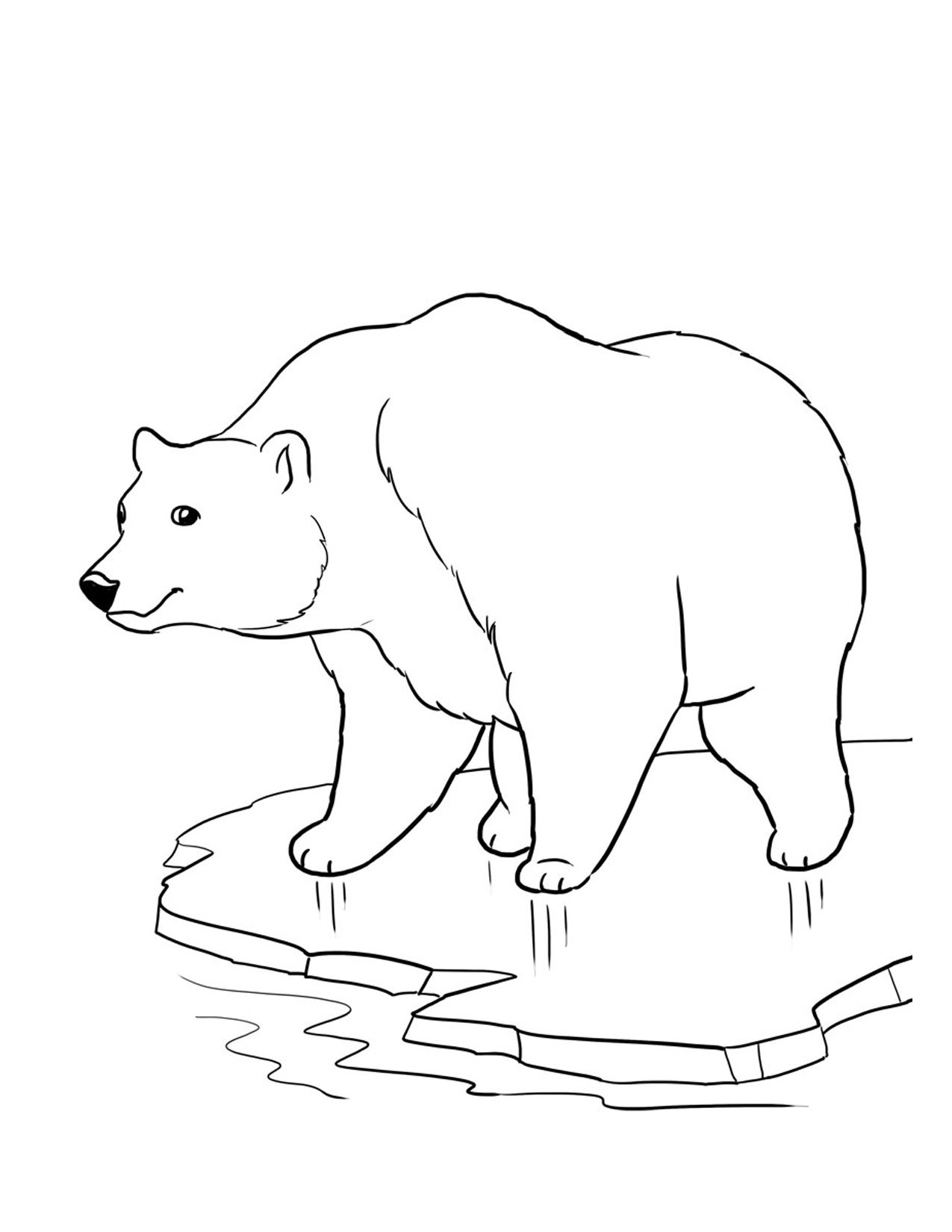 Polar Bears Coloring Pages. Printable Polar Bear Coloring Pages - Polar Bear Printable Pictures Free