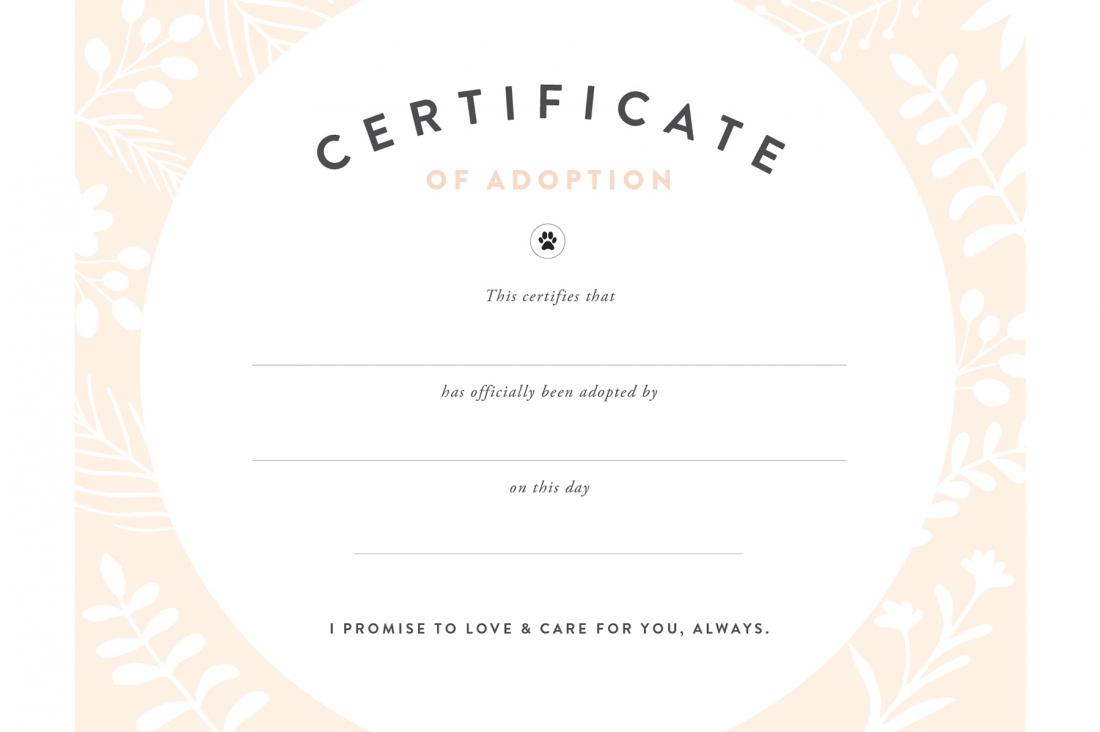 Pretty Fluffy - Free Printable Stuffed Animal Adoption Certificate