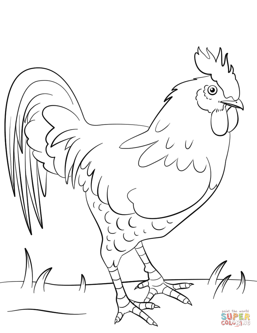 Rooster Coloring Page   Free Printable Coloring Pages - Free Printable Pictures Of Roosters