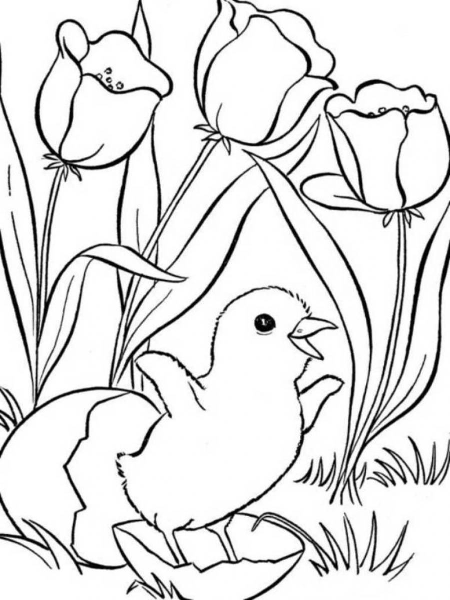 Spring Coloring Pages, Printable Spring Coloring Pages, Free Spring - Free Printable Spring Pictures To Color