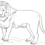 Standing Lion Coloring Page | Free Printable Coloring Pages   Free Printable Picture Of A Lion