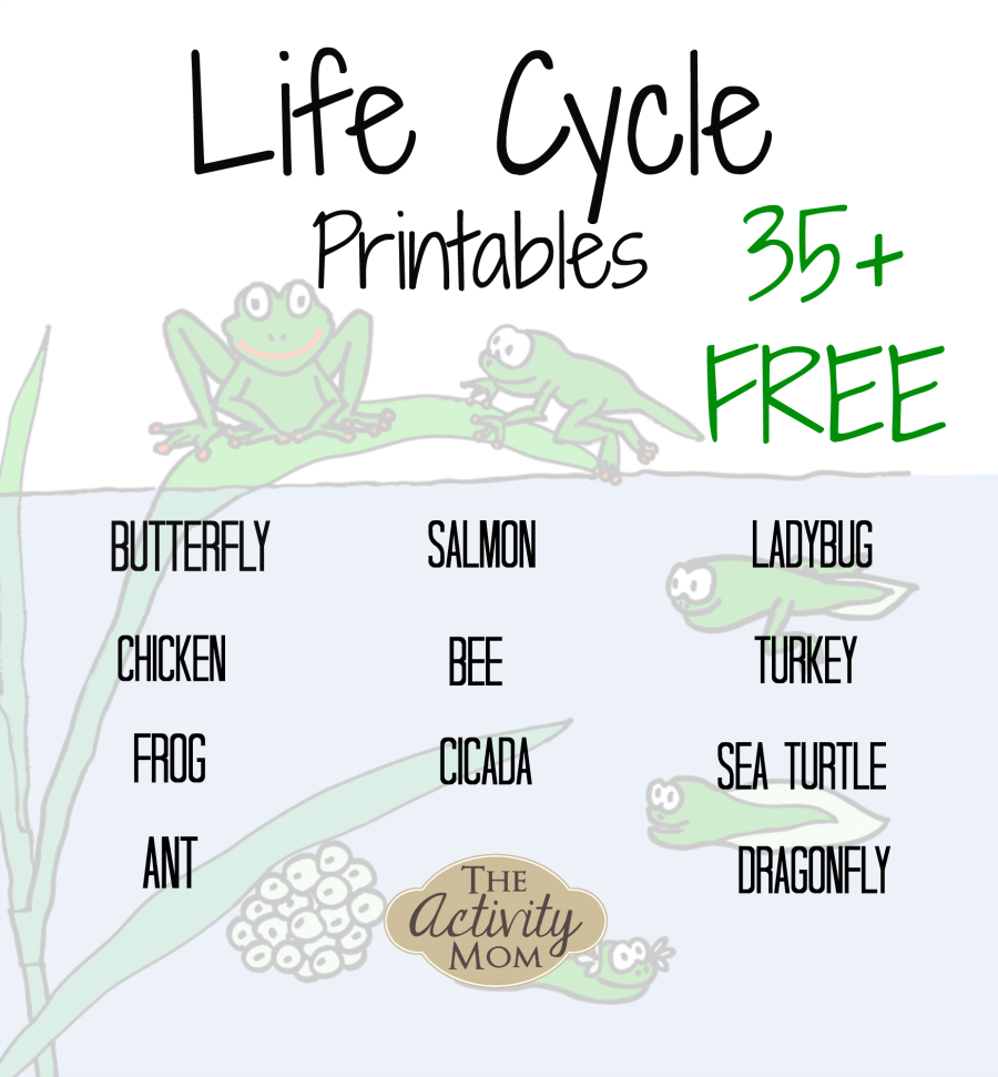 The Activity Mom - Life Cycles Printable - The Activity Mom - Life Cycle Of A Frog Free Printable Book