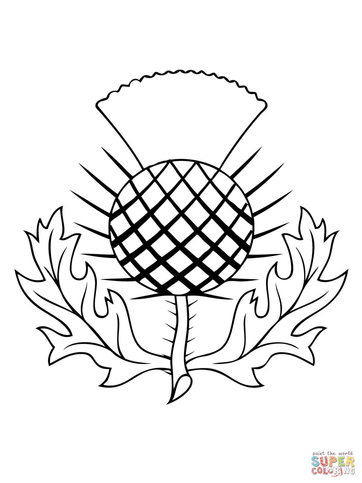 The Thistle Of Scotland Coloring Page | Free Printable Coloring - Free Printable Scottish Flag