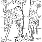 Wild Animal Coloring Pages | Animal Coloring Pages | Pinterest   Free Printable Wild Animal Coloring Pages