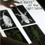 Zoology: Exploring X Rays On The Light Table   Montessori Homeschool   Free Printable Animal X Rays