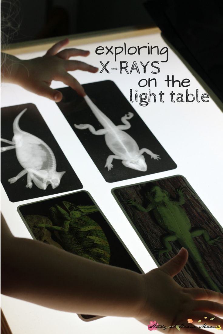 Zoology: Exploring X-Rays On The Light Table | Montessori Homeschool - Free Printable Animal X Rays